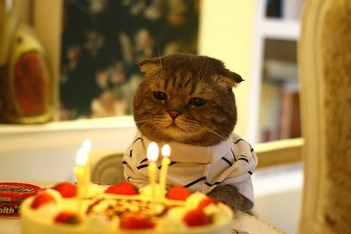 Sad-Birthday-Cat